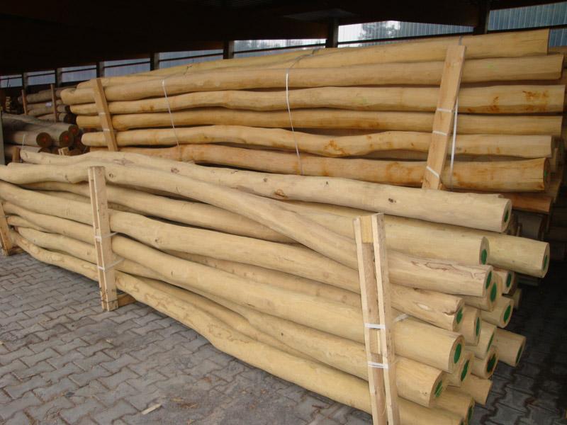 Rundholz Robinie Markpine Holzindustrie Nahmitz